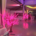 Arbre lumineux rose location Angers