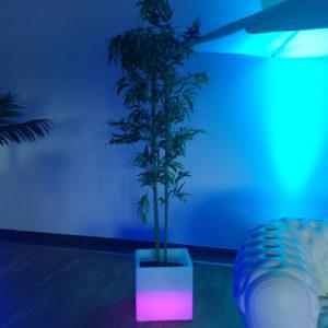 Bambous artificiels location 49