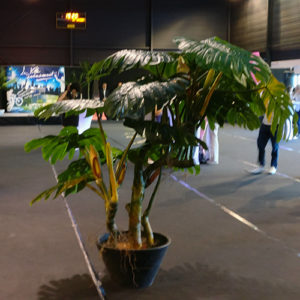 Plante artificielle Monstera location
